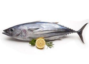 How To Pack Tuna